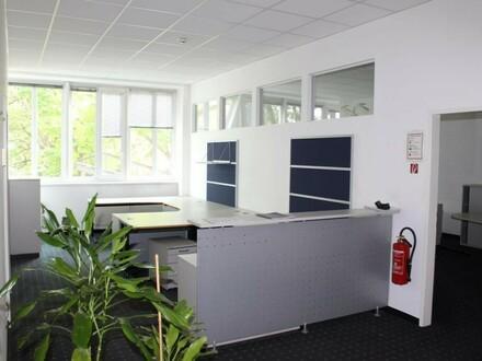 Blick in den Park - Büro & Archiv