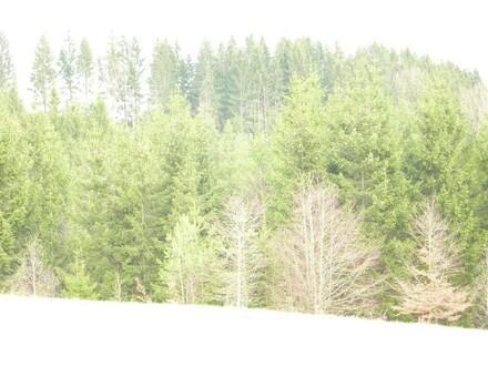 Wald und Wiesengrund