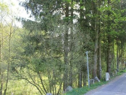 Waldgrundstück an der tschechischen Grenze