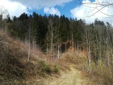 Waldgrundstück in einem Naturschutzgebiet