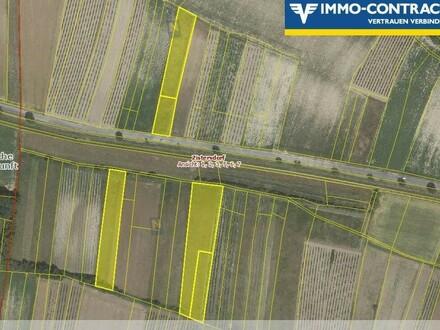 5 landwirtschaftliche Flächen, Brachland