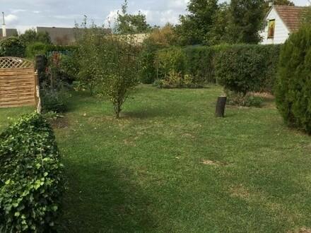 Garten mit Hauswand (1)