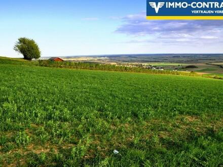 Traumlage in den Weinbergen - Etwas ganz Besonderes mit herrlichem Ausblick!