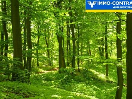 Wald - Eingebettet in ein schönes Waldgebiet im Südburgenland