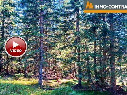 Forstflächen in Untertilliach