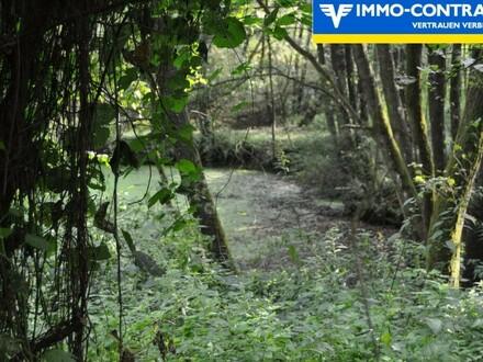 Einzigartiges Naturparadies, mit Fischteich Wasserrecht, viel Wald und einen Gerätehäuschen