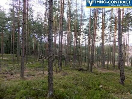 Wald mit Freiflächen
