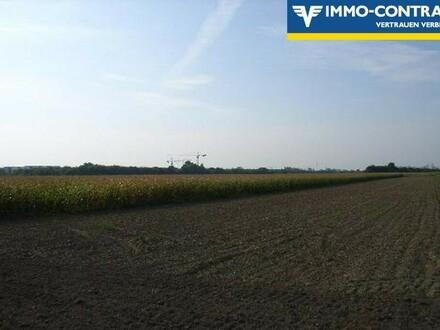 Landwirtschaftliches Grundstück in Stammersdorf