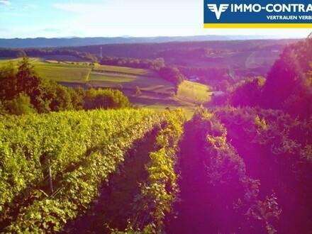 Buscchenschank und Weinberge mit extra Stüberl - Und riesiger Terrasse im Grünen - Traumlage mit herrlicher Aussicht