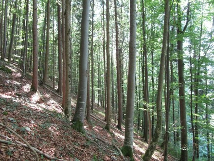 Schöner Mischwald 50 - 150 jähriger Bestand