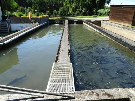 Fischteichanlage in Alleinlage mit gepflegtem Landhaus