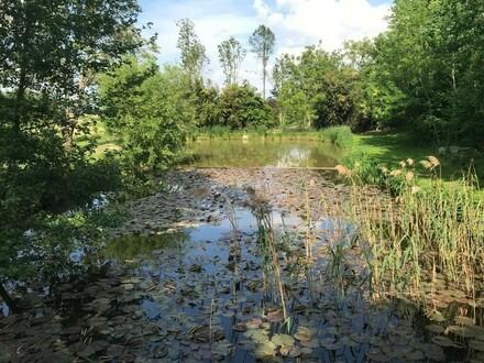 Grundstück in Alleinlage mit Teich und genehmigter Hütte - eine Rarität