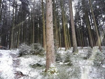 Wald mit guter Erreichbarkeit