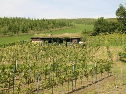 Weingarten mit Kellergebäude im Innviertel