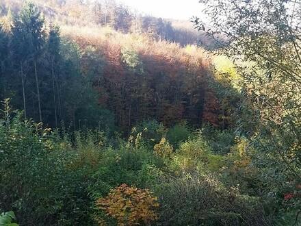 Baugrund am Waldrand mit Grünlandanteil