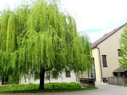 Wohnen in einem geschichtsträchtigen Gebäude - 90 m² Wohnung in der Niedermühle