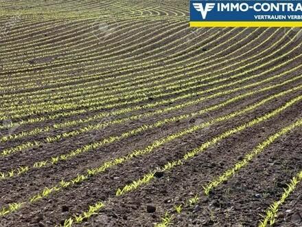 Guter Ackerboden und Wald in Wilhering zu erwerben