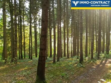 2 Waldflächen