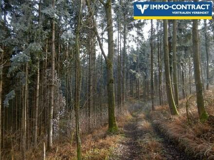 Waldfläche im Raum Strengberg-Wolfsbach