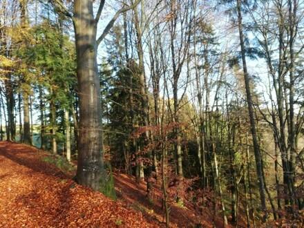 Schönes Waldgrundstück - Mischwald