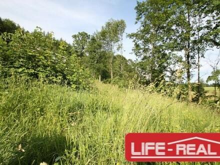 sonniges Grundstück in Hanglage mit Linzblick