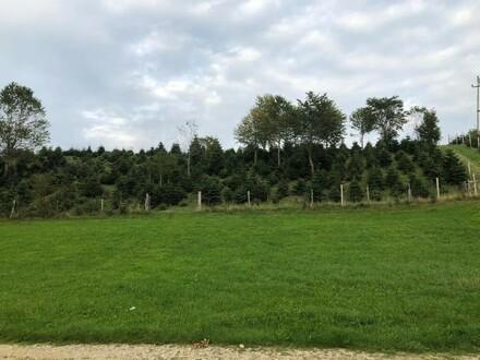 Grundstück in Hanglage