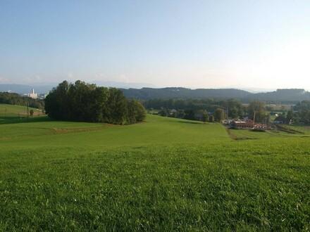 Landwirtschaftliche Fläche - arrondiert - Nutzgrund 65.000 m²