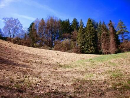 Waldrandlage