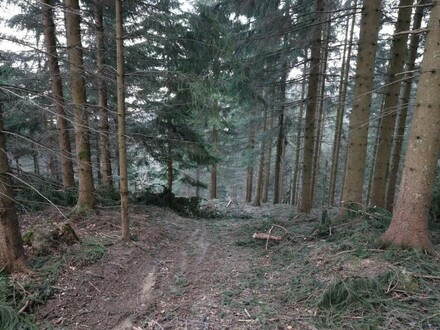 Terminbesichtigung am Fr. den 10.05.2019 - Nachhaltig investieren - Waldgrundstück am Eiskogel - für den Käufer provisionsfrei
