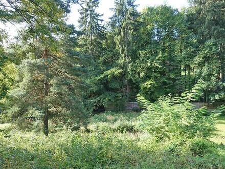 Grundstück mit Altbaumbestand