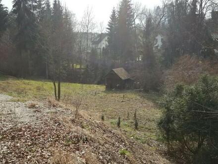 Großes Grundstück mit kleinem Wald dabei