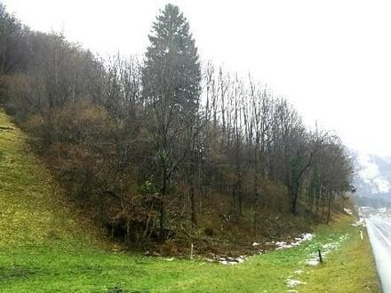 Waldparzelle in Scheffau