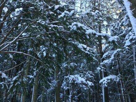 Waldfläche Bergersreit; St. Koloman