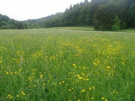 Wiesen zum Mähen für Gras / Heugewinnung bei Aidlingen