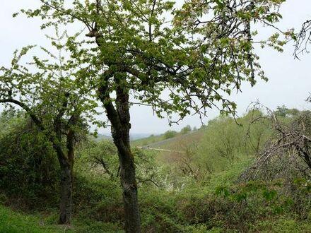 Gartengrundstück mit Obstbäumen (Wochenendnutzung)