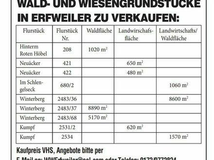 Wald und Wiesengrundstücke in Erfweiler zu verkaufen